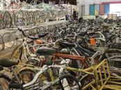 ateliers vélos poussent comme cham-pignons