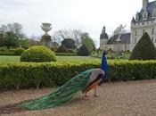 dessous Loire Valencay alentours