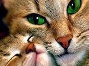 réalisation maison provençale chats