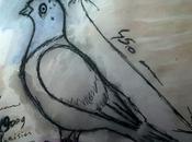 retour pigeons