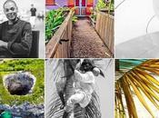Guadeloupe l'Essentiel blog ouvert portes l'édition