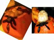 Recette soupe citrouille, courge potimarron pour Halloween (vegan)