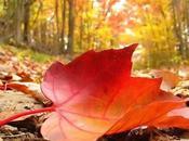 Exemples coques pour l'automne