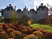 [Podcast] 'Les Conseils Jardin Françoise' Chrysanthème Cheverny