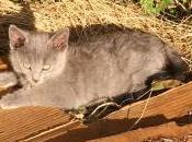 Jeune chat soleil