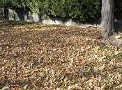 feuilles d'automne...