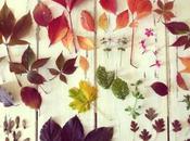 feuilles séchées, recyclage d'un vieil abat-jour