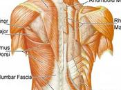 meilleurs exercices pour muscler
