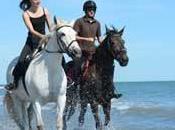 Jamais sans trousse secours pour chevaux
