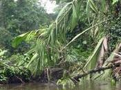 déforestation favorise l'émergence nouvelles maladies infectieuses