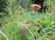 jardin, source plaisirs illimités pour toute l'année