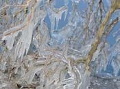 Genève autour l'eau: Glace verglas pour spectacle éphémère