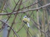 oiseaux sauvages font rare, nourrir hiver