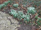 floraison perce-neige