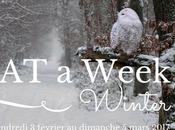l'ordi Spécial Week Winter Edition