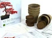 Cultivez votre bonsaï kit….