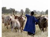 Niger Résoudre durablement conflits agriculteurs-éleveurs