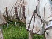 Pourquoi cheval gratte