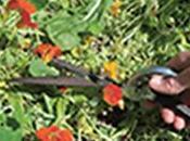 'Les Conseils Jardin Françoise', Permaculture adaptée jardinage