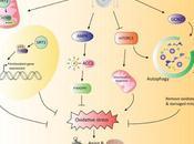 #trendsinendocrinologyandmetabolism #nutrients #stressoxydatif #vieillissement Détection nutrients Réponse stress oxydatif