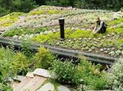 Créer toiture végétalisée avec Sedum, mode d'emploi