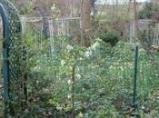 petit tour jardin