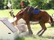 L'ostéopathe équin allié pour bien-être votre cheval