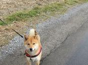 chien sourit deuxième aussi…….quoi c'est plutôt tiré langue