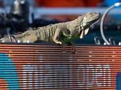 animaux s'aventurent terrains tennis