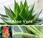 Vidéo, plantes pour votre chambre coucher