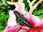 Papillons liberté