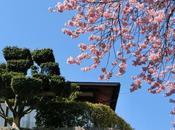 mars Japon images