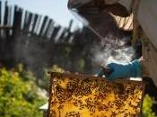 Mortalités abeilles pesticides apiculteurs contestent étude ministère l'Agriculture