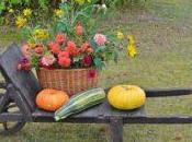 peut apporter livre jardinage