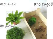 mini jardin cagette