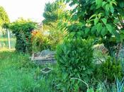 Quelques vues jardin permaculture juin 2017
