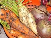 Semez plantez maintenant premiers légumes d'hiver