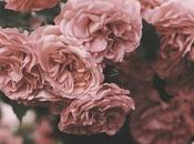 rose pour plantes vertes