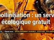 pollinisation, service écologique gratuit, dossier futura-sciences