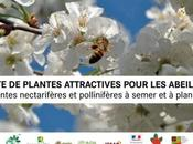 juin, semaine française plantes mellifères