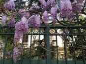 glycines jardin