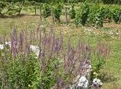 Pélerinage estival Dégustation domaine l'Arlot (Premeaux-Prissé)