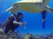 meilleures destinations pour faire plongée sous-marine