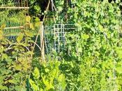 permaculture principes revenons bases