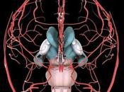 FIBROMYALGIE anomalies cérébrovasculaires cause