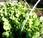 Quelques exemples légumes d'hiver (vidéo)