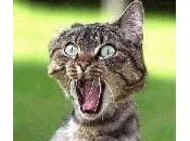 chat...19 jours tête coincée dans bocal