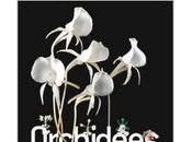 Orchidées madagascar cité sciences