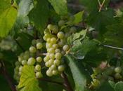 Sud-Revermont côté terroirs (2): Grands Teppes