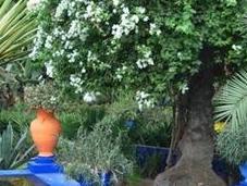 Bleu Jardin Majorelle